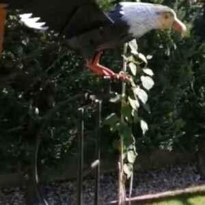 Орел за градината от метал задвижване от вятъра, нов внос от Нидерландия